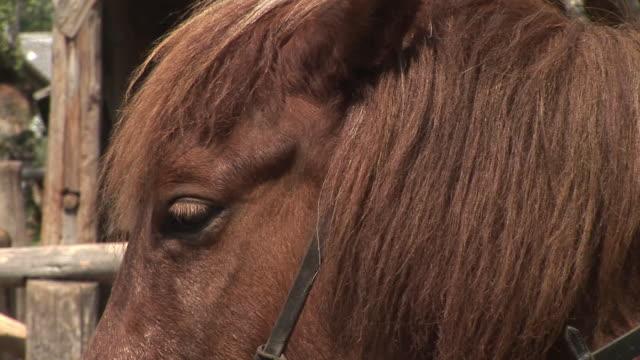 stockvideo's en b-roll-footage met hd: brown horse - neus van een dier
