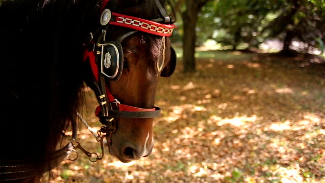 brown horse - cinemanis videography stock videos & royalty-free footage