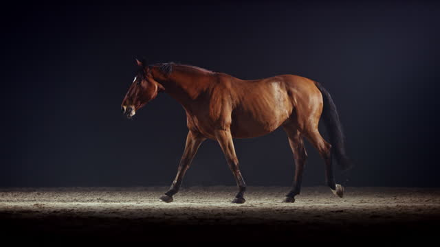slo mo brown horse walking across riding hall - brown stock videos & royalty-free footage