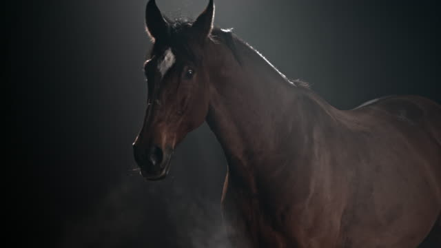 slo mo brown horse walking at night - brown stock videos & royalty-free footage
