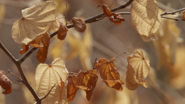 Brown leaves on branch rustle in breeze.