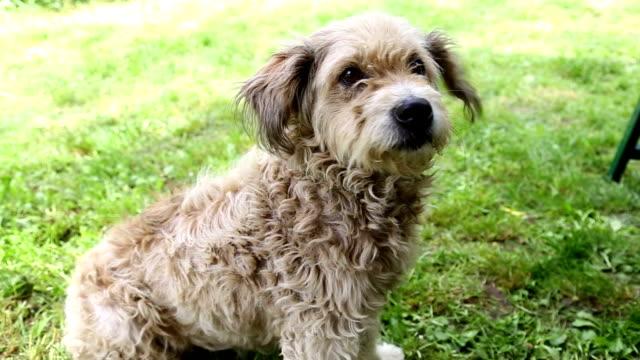 braun kleinen hund ruhen im natur - tierische nase stock-videos und b-roll-filmmaterial