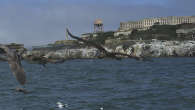 ws slo mo brown pelican fly low over water with alcatraz prison in background - アルカトラズ島点の映像素材/bロール