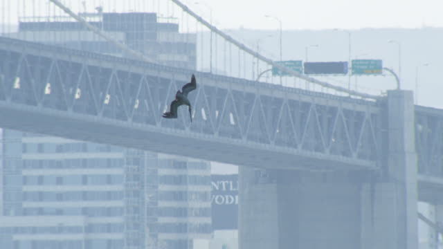 ws brown pelican plunge diving with oakland bridge in background - pelican stock videos & royalty-free footage