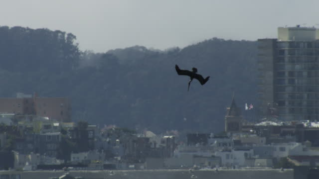ws brown pelican plunge diving with san francisco waterfront in background - pelican stock videos & royalty-free footage