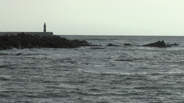 ws brown pelicans (pelecanus occidentalis) flying over rocky shore with lighthouse in background, antofagasta, chile - antofagasta region stock videos and b-roll footage