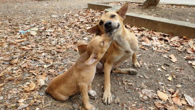茶色い子犬 - 依存点の映像素材/bロール