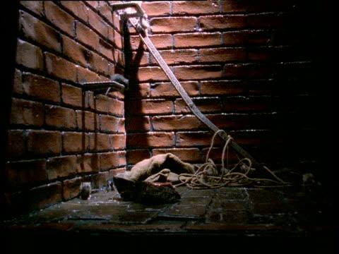 Brown rats crawl around brick walls of building at night UK
