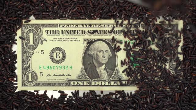 玄米カバー1ドル紙幣 - 玄米点の映像素材/bロール