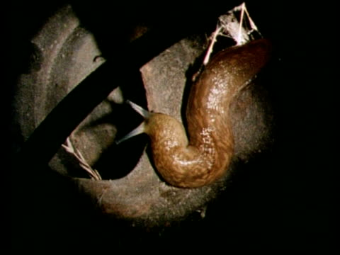 brown slug from above, moving antennae - brown stock videos & royalty-free footage