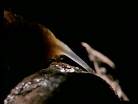 cu brown slug, head and antennae - slug stock videos and b-roll footage