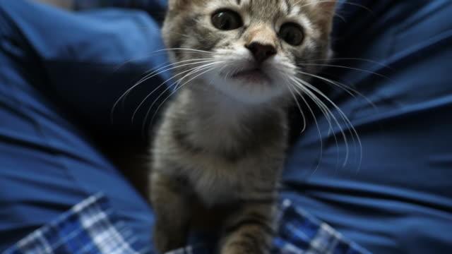brown tabby kitten trying to climb to the camera - 座る点の映像素材/bロール