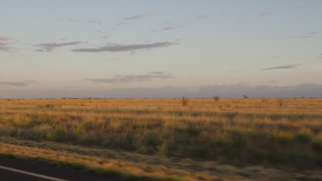 a brownish grassy plain shot - copse stock videos & royalty-free footage