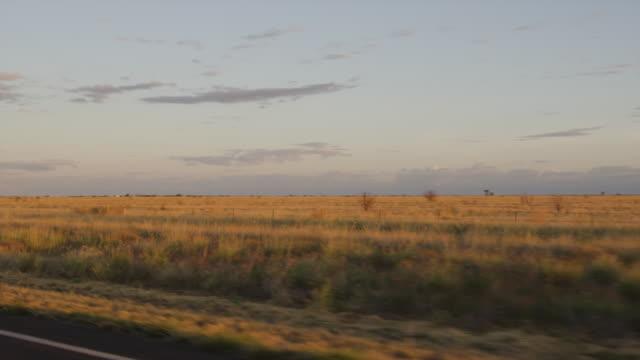 a brownish grassy plain shot - baumgruppe stock-videos und b-roll-filmmaterial