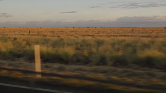 a brownish yellow grassy plain - baumgruppe stock-videos und b-roll-filmmaterial