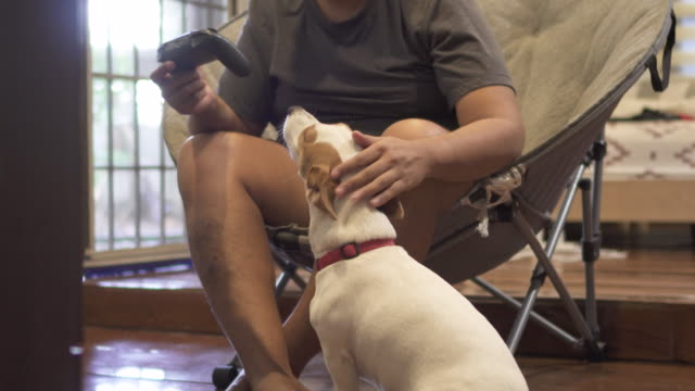 ms brown-skinned man petting jrt during game time - overweight dog stock videos & royalty-free footage