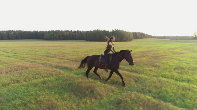brunette girl rides a horse - gollop. - all horse riding stock videos & royalty-free footage