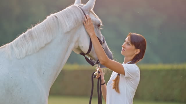 slo mo brunette woman stroking her white horse outside on a meadow - stroking stock videos & royalty-free footage