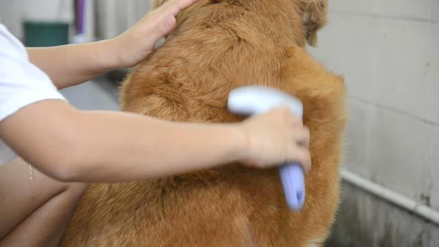 Brush Dog's Fur