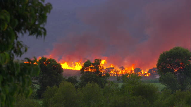 a brush fire rages in an australian forest. - emergencies and disasters stock videos & royalty-free footage