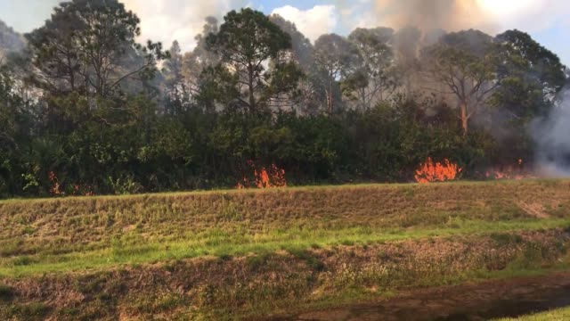 a brush fire seen near palm bay regional park - woodland stock videos & royalty-free footage