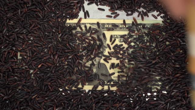 ブラッシュ玄米カバー20ドル紙幣 - 玄米点の映像素材/bロール