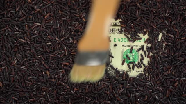ブラッシュング玄米は1ドル紙幣をカバー - 玄米点の映像素材/bロール