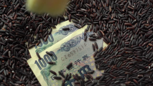 ブラッシュ玄米カバー1000円紙幣 - 玄米点の映像素材/bロール