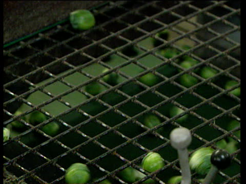 brussels sprouts bouncing along grading grid in factory uk - brussels sprout stock videos & royalty-free footage