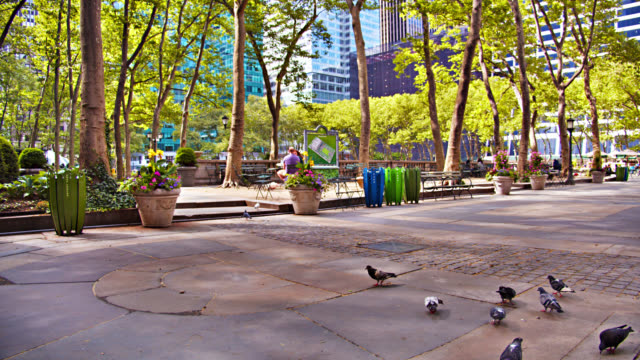 bryant park in new york. upbringing economy. birds. nature - bryant park stock videos & royalty-free footage