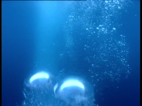 Bubbles burst and rise through blue ocean.