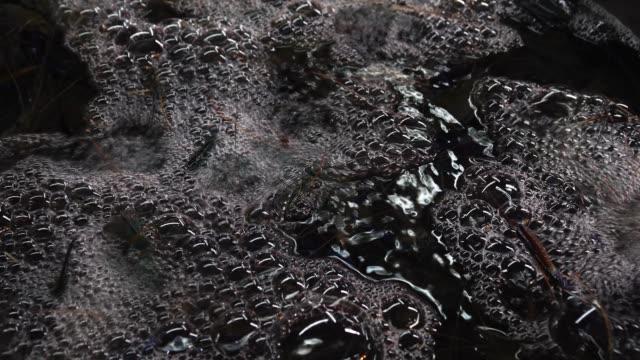 販売のためのシーフード市場でのエビの酸素によって引き起こされる泡。 - テナガエビ点の映像素材/bロール