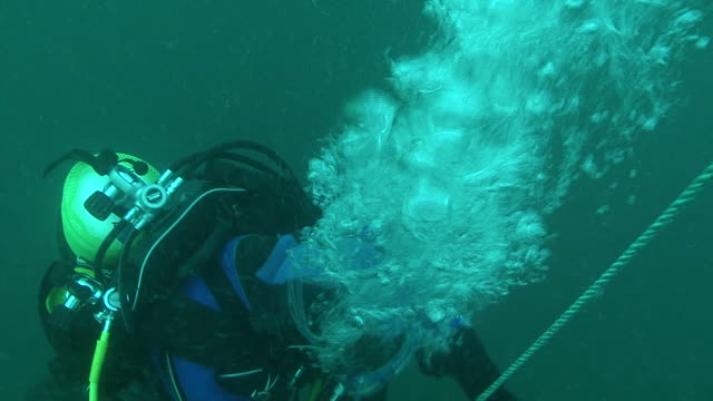 vídeos de stock e filmes b-roll de bubbles from a diver. channel islands, british waters - ilhas do canal da mancha