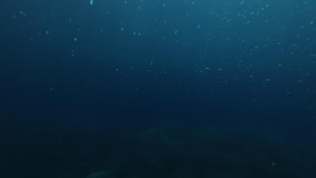 bolle che si muovono sott'acqua - sottomarino subacqueo video stock e b–roll