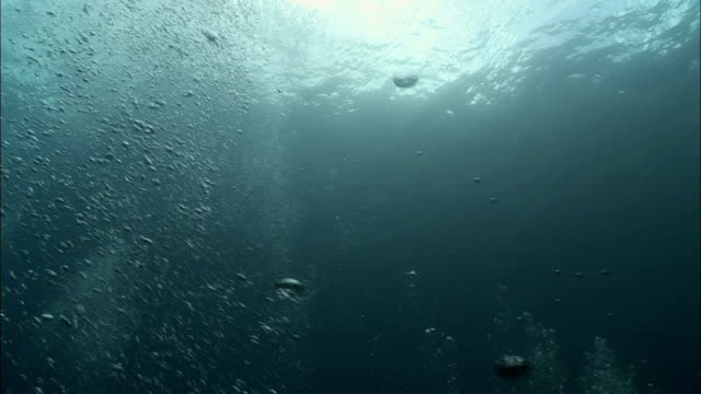 ms, la, bubbles moving up to sea surface, underwater view, saint lucia - saint lucia stock-videos und b-roll-filmmaterial