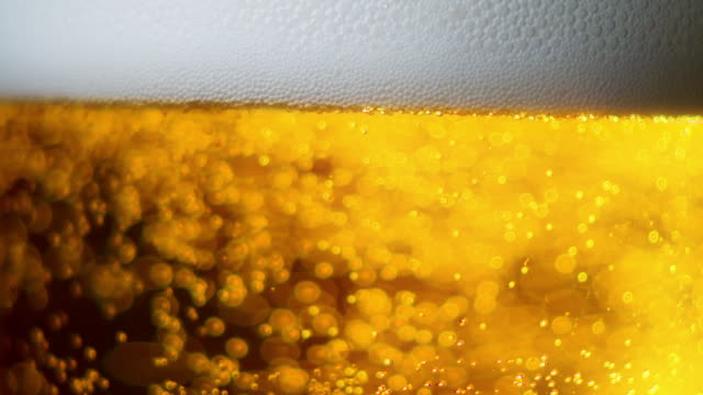 Bubbles of carbonation rise to foamy head in beer glass