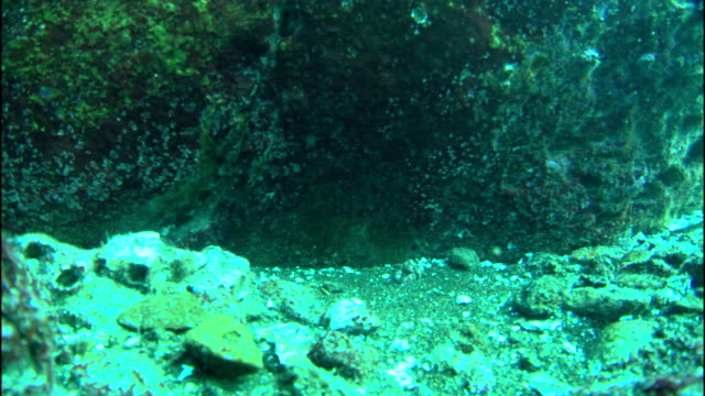 bubbles rise from a hot seep on the ocean floor. - seabed stock videos & royalty-free footage