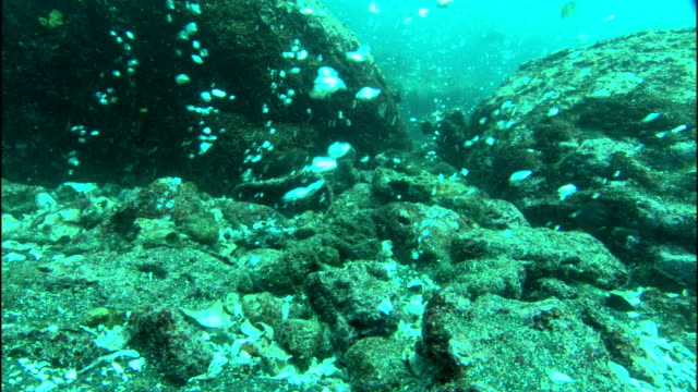 bubbles rise from hot seeps on the ocean floor near the galapagos islands. - seabed stock videos & royalty-free footage