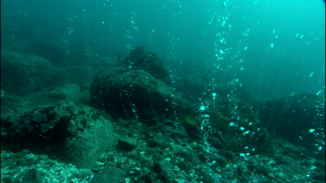 bubbles rise from hot seeps on the ocean floor. - seabed stock videos & royalty-free footage