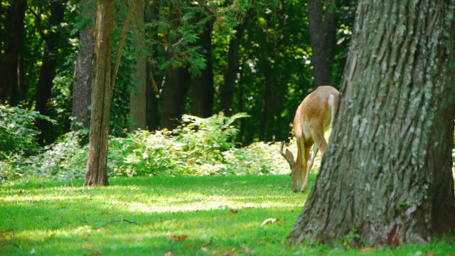 A Buck in the Woods (2 of 2)