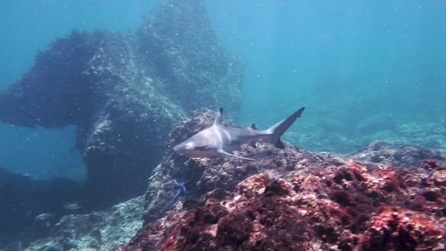 bucket list dive with black tip reef shark - animal fin stock videos & royalty-free footage