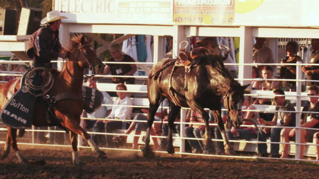 Bucking bronc running loose in rodeo ring shot in slow motion.