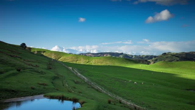 Bucolic Scene Near Blairlogie, New Zealand