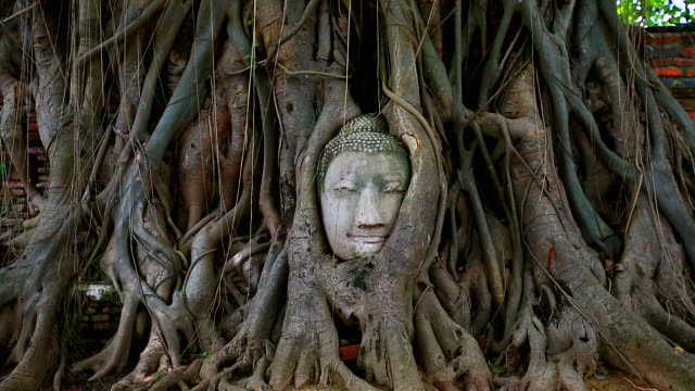 buddha head in tree roots on the wat mahathat temple in ayutthaya, bangkok, thailand - spirituality stock videos & royalty-free footage