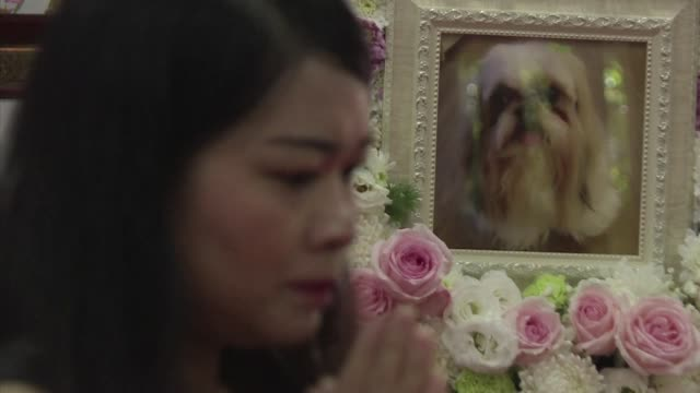 Buddhist monks chant next to a pink coffin where Dollar's small body is nestled amongst flowers a $600 final farewell for the Shih Tzu at a Bangkok...