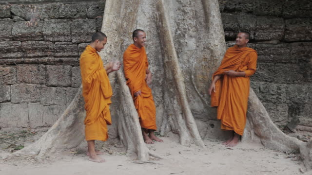 vídeos de stock e filmes b-roll de ms buddhist monks stand next to a large, old tree talking and laughing together while one monk gets a call on a mobile phone, at an ancient temple in angkor wat / siem reap, cambodia - camboja