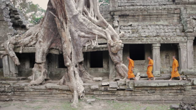 WS Buddhist monks walk between the roots of a huge tree growing over the ruins of an ancient jungle temple / Siem Reap, Cambodia