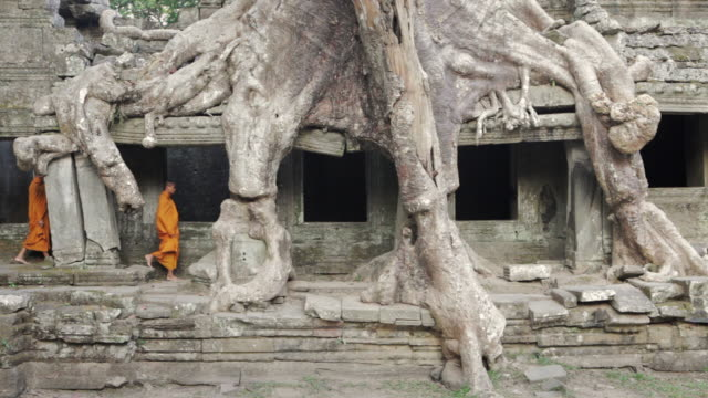 MS Buddhist monks walk between the roots of a huge tree growing over the ruins of an ancient jungle temple / Siem Reap, Cambodia