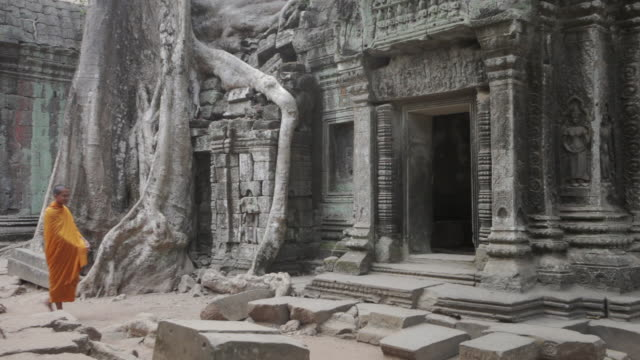 ws buddhist monks walk into an ancient jungle temple past a large tree carrying alms bowls in angkor wat / siem reap, cambodia - root stock videos & royalty-free footage