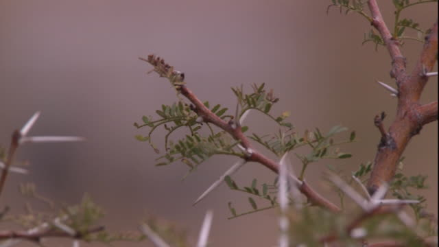 buds bloom on a thorny bush. - bush stock videos & royalty-free footage
